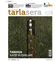 tarlasera